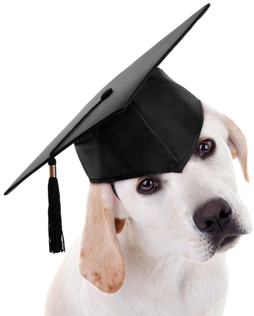Dog with a graduation hat on