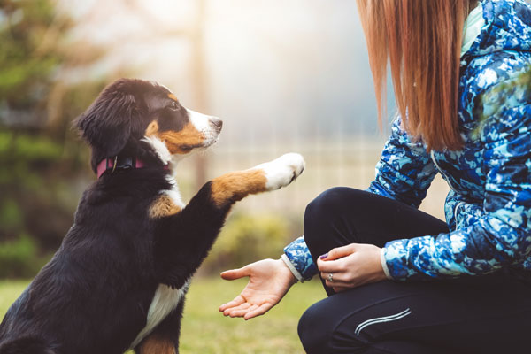 Training a puppy to shake hands