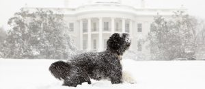 Dog at Snowy White House
