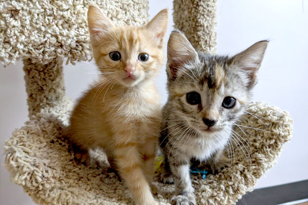 Two kittens on a cat tree
