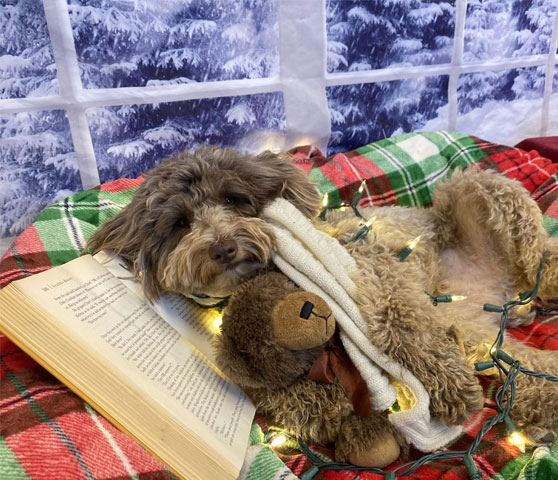 Dog relaxing in bed with a book